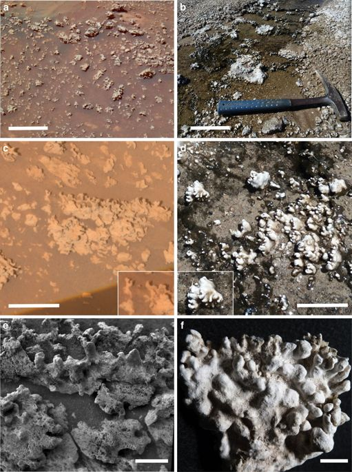 Silica nodules observed by Spirit rover on Mars compared with those at hot springs on Earth.